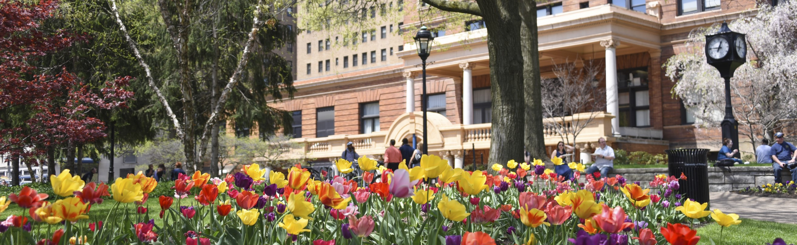 William Pitt Union with colorful spring tulips in foreground