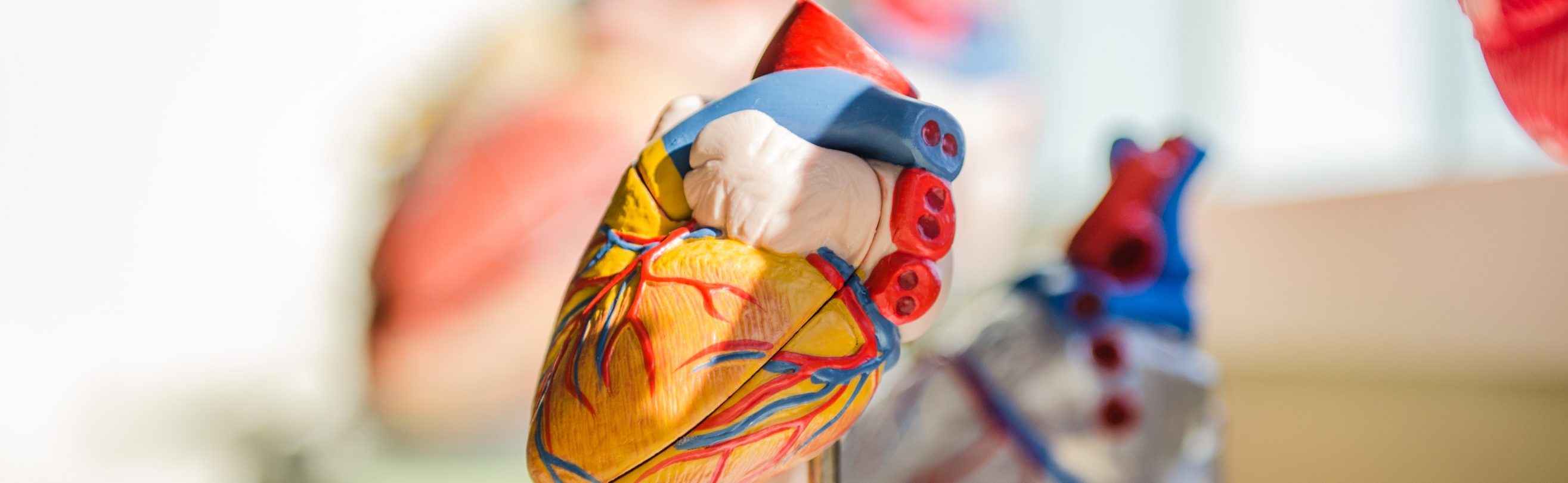 Heart model on small statue