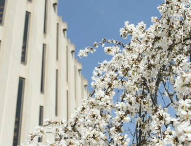 Hillman Library exterior with blooming tree on right